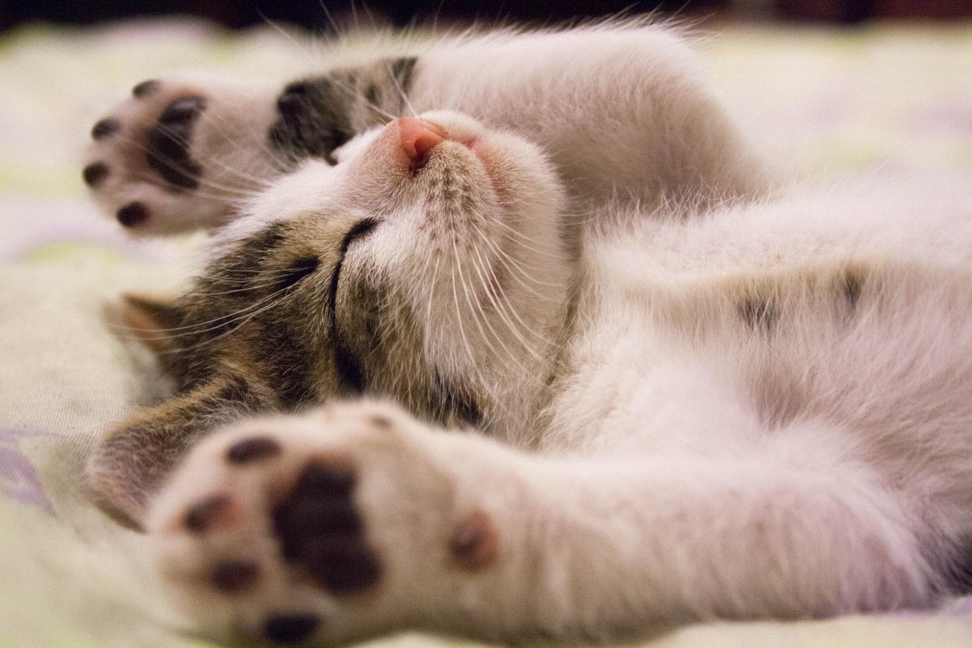 5 techniques endormir plus rapidement