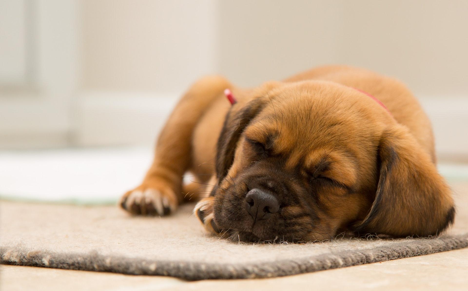 role du sommeil